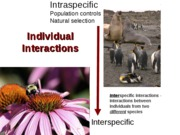 Lecture 16. Interspecific interactions- predation posted