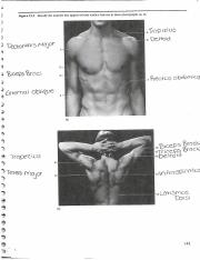 Anatomy chest and back