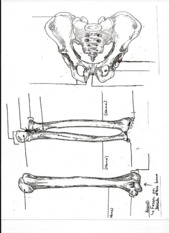 Bone diagrams page 3