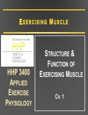 3 Exercising Muscle