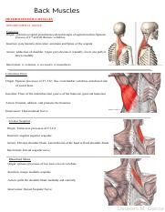 Dissection I-back muscles(ORIGIN, INSERTION, INNERVATION AND ACTION).pdf