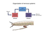 5 Nervous Systems