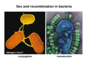 07 Genetic Recombination in Bacteria and Viruses