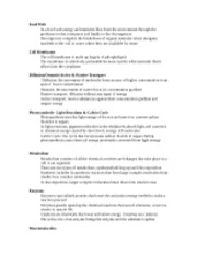 Food Web Notes