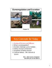 16 Chapter 52 osmoregulation and excretion