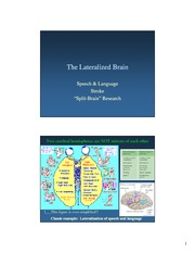 Lateralized Brain