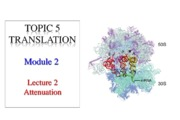 T5M2Lecture2Attenuation (1)
