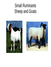Chapters 20 and 21 Sheep and Goat Handouts 2015