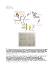 sordaria finicola lab report Free pdf ebooks (user's guide, manuals, sheets) about biology crossing over lab report sordaria fimicola ready for download.