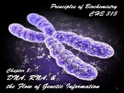 Chapter 8 DNA,RNA, Flow of Genetic Information