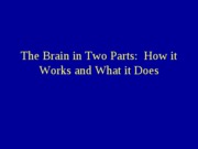 Brain in Two Parts 9-16-10