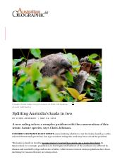 Splitting the koala down the middle - Australian Geographic
