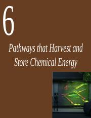 Ch 6 Pathways that Harvest and Store Chemical Energy