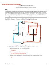 POGIL_The_Circulatory_System.pdf - Kevin Sullivan and Tyler ...