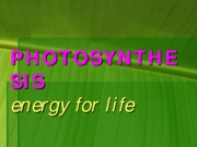 21168097-Chloroplast-and-Photosynthesis