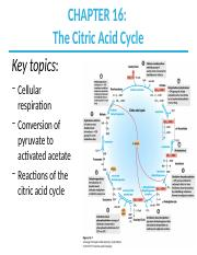 CH16_Citric_Acid_Cycle