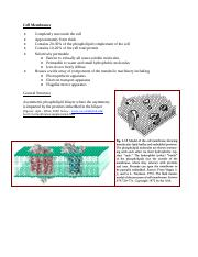 2 Cell Membranes - UPDATED.pdf