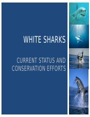 marketing plan shark shield Blushark digital works with companies of all sizes to establish by developing an advanced content marketing plan specific to your business model, we can help.