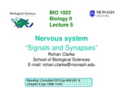 Lecture 5 - Nervous System