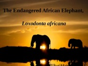 The Endangered African Elephant,