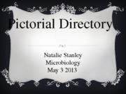 Pictorial Directory micro