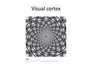 Lecture 19 Visual Cortex