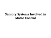 Motor Control- Vision Eye Movements