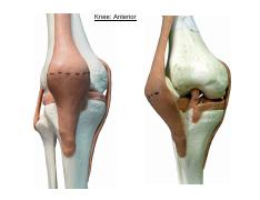 Ex 12-Knee Joint Unlabelled.pdf
