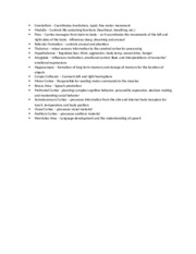 Brain parts assignment_answer key (1)