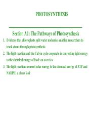 iv. Photosynthesis.ppt