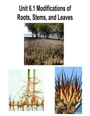Unit 6.1 Modified roots, stems, & leaves