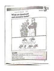 Dominant and Recessive Traits Worksheet