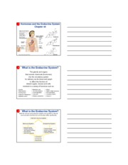 Ch 45 - endocrine system (3 slides per page)