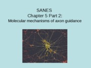 5 SANES CH 5.2 only 2009 (1)