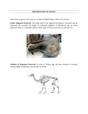PRESERVATION OF FOSSILS.docx