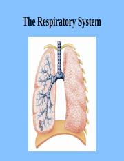 Chapter 23  Respiratory System.ppt