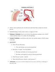 Anatomy and Physiology II Final Study Guide - Anatomy Exam 1