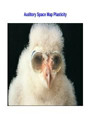 Barn Owl Space Map Plasticity 2018.ppt