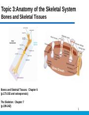Anatomy of the Skeletal System Part 1