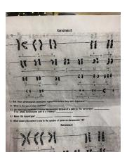 karyotype_worksheet.pdf - Biology Karyotype Worksheet Name ...