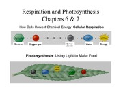 Lab 5 Respiration and Photosynthesis