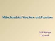 Lecture 8 Mitochondrial strucure and function
