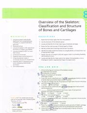 Overviw of The Skeleton.pdf