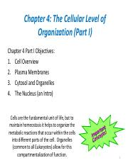 Chapter 4- Cellular Level of Organization 1