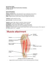 Lecture32_35MuscularAnatomy.docx