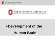 2+Brain+Development