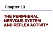 The Peripheral Nervous System and Reflex Activity