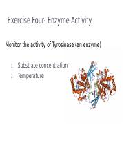 Ex04- Enzyme Activity and Environmental Effects(1).ppt