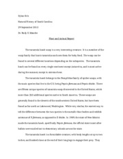 Plant and animal essay