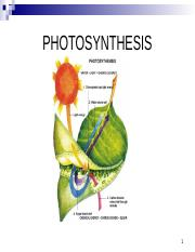 photosynthesis and photorespiration 2014